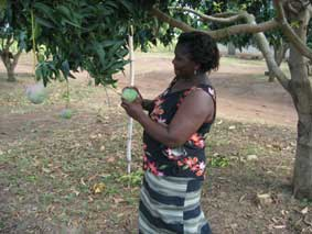 mangue-biologique