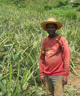 paysan-ananas